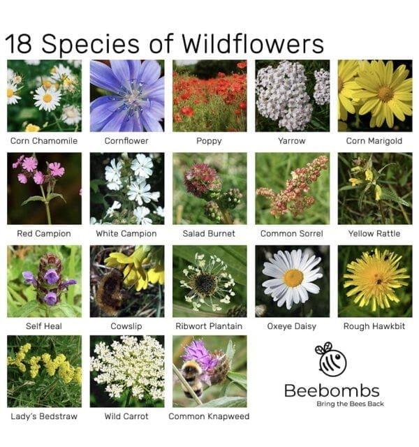 Wild Flower List
