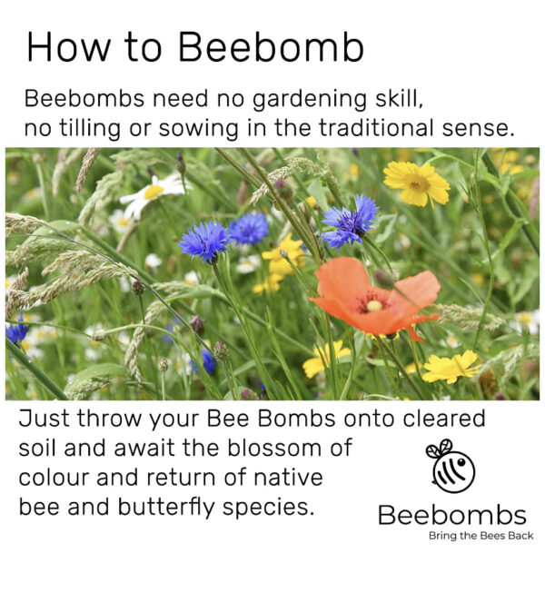How to Beebomb